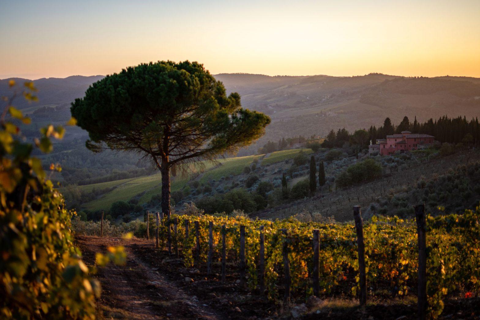 Bildresultat för Il Palagio di Panzano winery